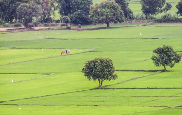 Vẻ đẹp thơ mộng của cánh đồng Tà Pạ An Giang