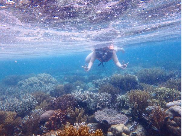 Khám phá rặng san hô ở Đảo Cô Tô