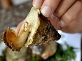 Ốc vú nàng món ăn ngon đặc sản Vũng Tàu