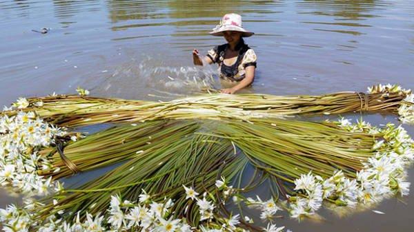 Du lịch Miền tây mùa nước nổi hấp dẫn thu hút