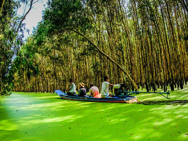 Khám phá rừng tràm trà sư điểm du lịch bụi An Giang hấp dẫn