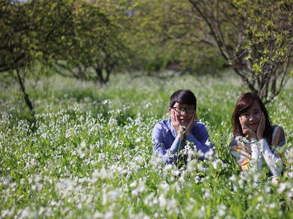 Phượt Mộc Châu ngắm trọn vẻ đẹp hoa cải trắng