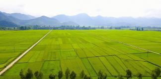 Vẻ đẹp thu hút của cánh đồng Mường Thanh Điện Biên