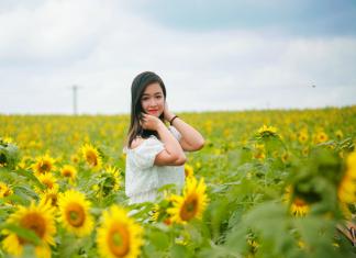 Khám phá cánh đồng hoa hướng dương Nghệ An