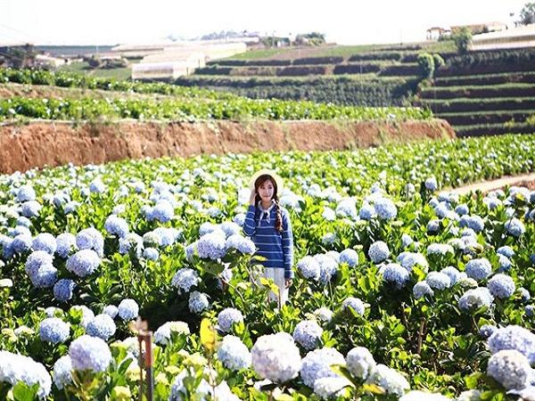 Vườn hoa Cẩm Tú Cầu - điểm