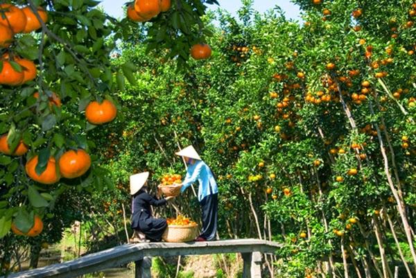 Trái cây miệt vườn - đặc sản Miền Tây mùa nước nổi